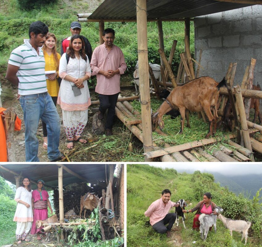 Goat distribution to needy people in rural villages